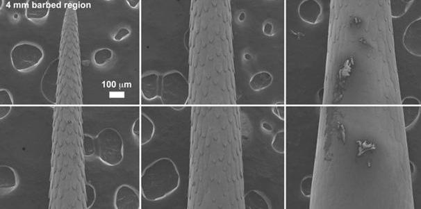 The Microstructure of North American Porcupine Quills